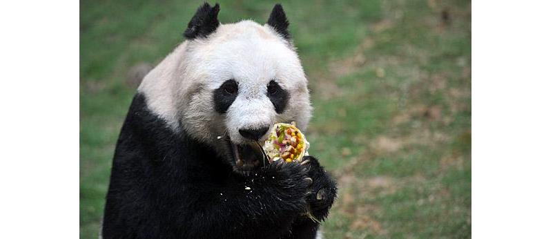 Pandas & Burritos - Analyzing Chipotle Order Data | Daniel